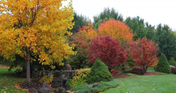 The red green yellow and orange colours of Mayfield Garden in Autumn.